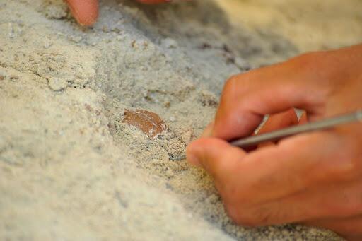 Tarihe ışık tutacak keşif! Bursa'da çoban buldu