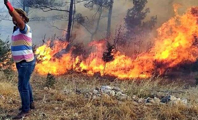 Son dakika haberi: Menteşede orman yangını